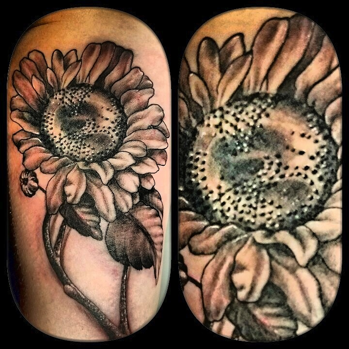 black and gray sunflower