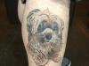 small dog tattoo
