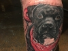 bull terrior tattoo