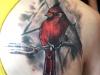 Micah-03-Cardinal